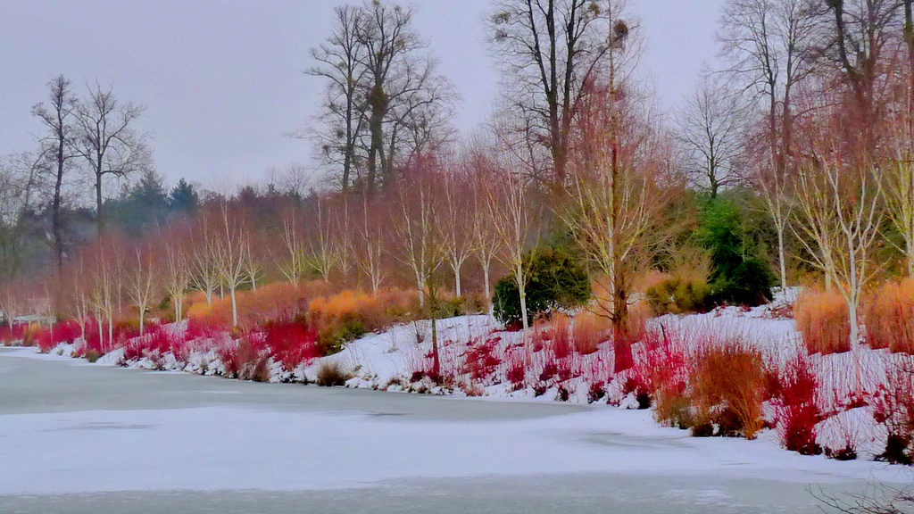Lakeside planting at Marks Hall Gardens & Arboretum - Essex