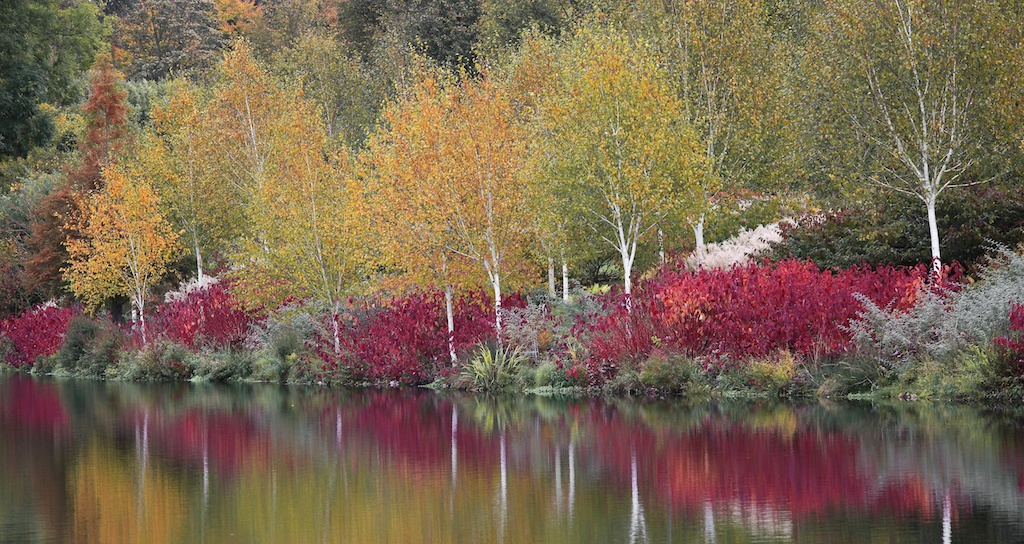 Lakeside planting for autumn and winter colour